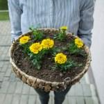 Kokius augalus rinktis, kad balkonas žydėtų visą pavasarį ir vasarą?
