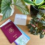 Kaip palikti kambarinius augalus namuose, išvykstant atostogų?