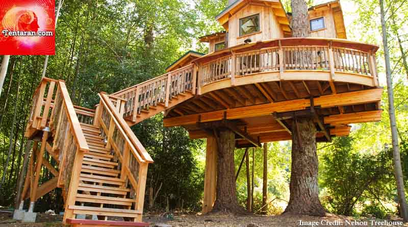 Stay in a tree house