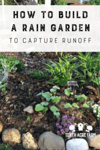 """Erfahren Sie, wie Sie einen Regengarten bauen, in dem Regenwasser von harten Oberflächen wie Dächern oder Gehsteigen abfließt, um das Wasser zu bewässern oder die Wasserverschmutzung zu verringern. #watermanagement #rainbarrels #raingarden """"width ="""" 534 """"height ="""" 800 """"srcset ="""" https://i2.wp.com/www.tenthacrefarm.com/wp-content/uploads/Build-a-Rain-Garden-Pin-534x800.png?fit=300%2C300&ssl=1 534w , https://www.tenthacrefarm.com/wp-content/uploads/Build-a-Rain-Garden-Pin-683x1024.png 683w, https://www.tenthacrefarm.com/wp-content/uploads/Build- a-Rain-Garden-Pin-200x300.png 200w, https://www.tenthacrefarm.com/wp-content/uploads/Build-a-Rain-Garden-Pin.png 735w """"sizes ="""" (max-width: 534px) 100vw, 534px"""