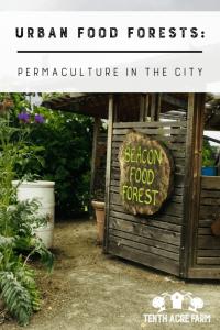 """Urbane Nahrungsmittelwälder: Demonstration der Permakultur in der Stadt - Lebensmittelwälder sind Permakulturgärten, die aus essbaren Stauden bestehen. Finden Sie heraus, wie zwei städtische Lebensmittelwälder die lokale Lebensmittelbewegung aufrütteln. #permaculture #urbangardening #foodforests """"width ="""" 534 """"height ="""" 800 """"srcset ="""" https://i2.wp.com/www.tenthacrefarm.com/wp-content/uploads/Urban-Food-Forests-pin-534x800.png?fit=300%2C300&ssl=1 534w, https : //www.tenthacrefarm.com/wp-content/uploads/Urban-Food-Forests-pin-200x300.png 200w, https://www.tenthacrefarm.com/wp-content/uploads/Urban-Food-Forests- pin-768x1151.png 768w, https://www.tenthacrefarm.com/wp-content/uploads/Urban-Food-Forests-pin-683x1024.png 683w, https://www.tenthacrefarm.com/wp-content/ uploads / Urban-Food-Forests-pin.png 1024w """"sizes ="""" (maximale Breite: 534px) 100vw, 534px"""