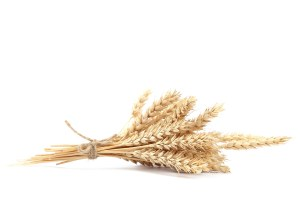 Sheaf of wheat ears