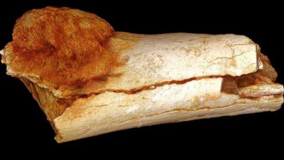 Resultado de imagen de hueso fosilizado de homínido