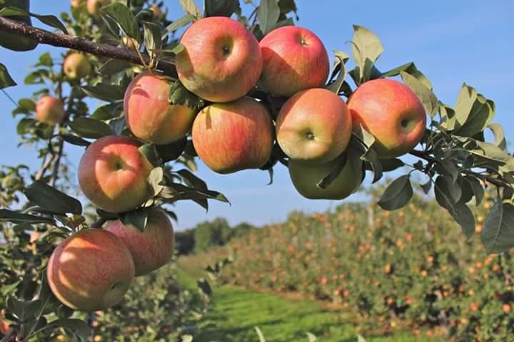 Sensasi Petik Apel Dan Belajar Berkebun Di Kota Batu Terakota