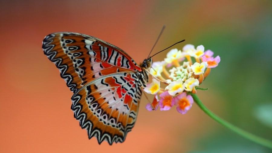 Farfalle Terapia della bellezza Consulenza di Immagine Roma corso Personal Shopper e Consulente di Immagine Roma 02