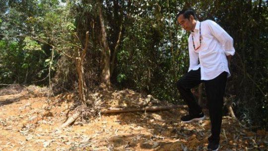 Presiden Joko Widodo berjalan di kawasan hutan Gunung Mas, Kalimantan Tengah, Rabu, 8 Mei 2019. Jokowi meninjau lokasi alternatif ibu kota baru Indonesia. ANTARA/Akbar Nugroho Gumay