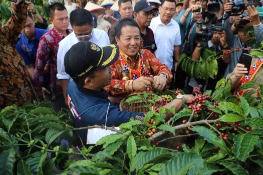 Gubernur Arinal Djunaidi memetik biji kopi di Kampung Rigis Jaya pada Festival Kopi Lampung Barat, Selasa (9/7/2019).