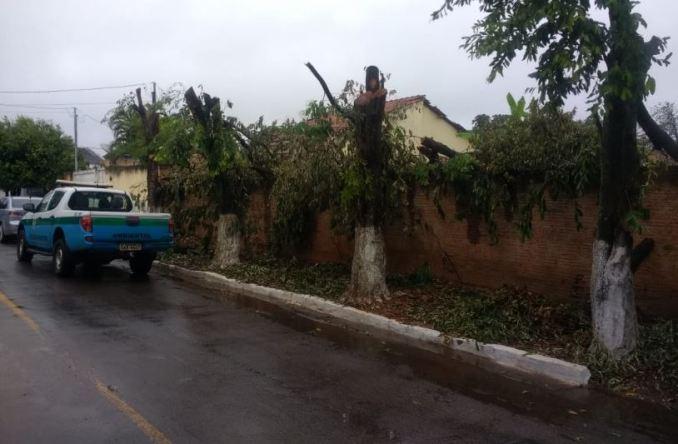 PMA autua infrator por danificar quatro árvores em logradouro público