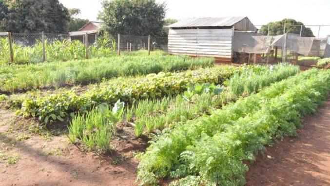 Durante pandemia, alunos de escola agrícola fazem horta para manter aprendizado