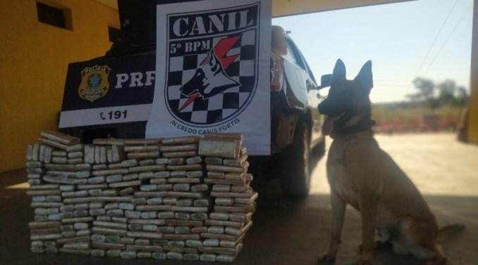 Com ajuda de cão farejador da PM de Coxim, PRF apreende 116 Kg de maconha