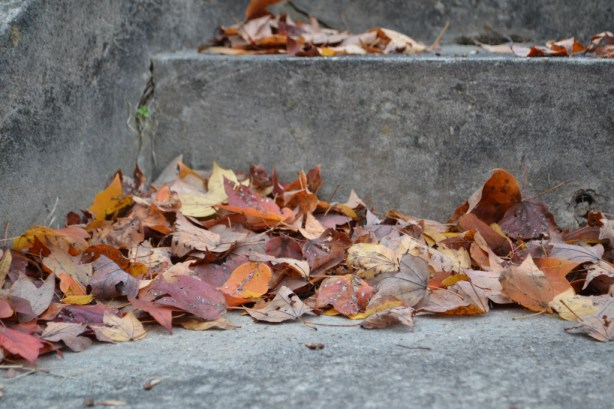 autumn, change, seasons