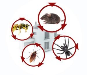 t pest-control