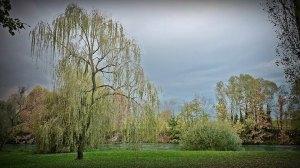 armonie-d-autunno