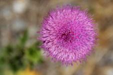 Bonita flor que vimos ao lado da Cueva de Las Manos