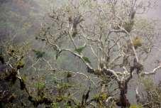 As árvores se escondiam na névoa