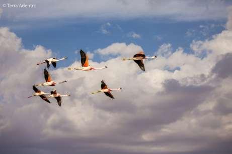 Flamingos em revoada no fim de tarde