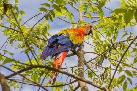 Com uma fauna exuberante, o país nos encantou. Imagem: Isla de Ometepe