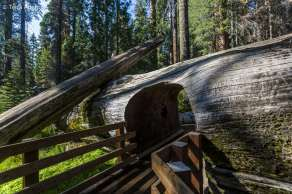 Sequoia National Park-1180
