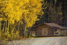 As folhas caindo, anunciando que o frio intenso estava para chegar
