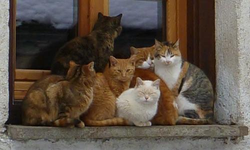 i gatti di rima