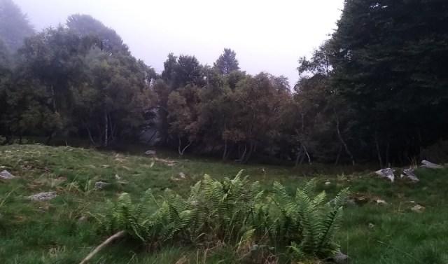 bosco di sera