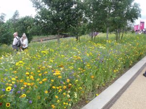 Wildflower meadows at the Olympic Village