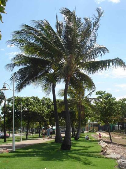 The Strand - Walking along the boulevard tropical Townsville