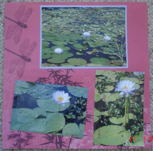 Scrapbooking-design layouts - waterlilies on the Ross River, Riverway, Townsville