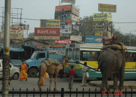 Elephants and camels merge with the busy traffic- incredible India