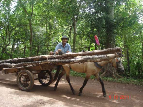 Khmer-Horse-and-logs