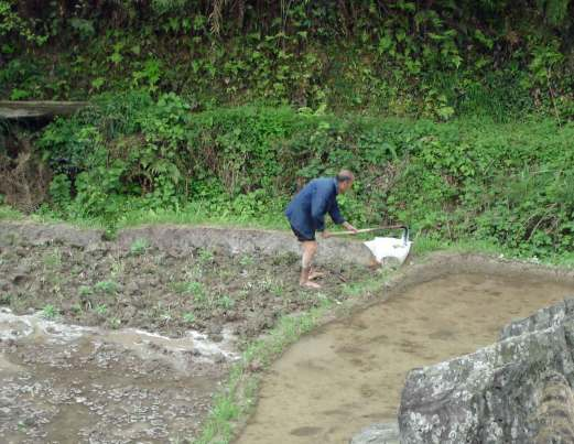 Hoeing-the-rice-terrace
