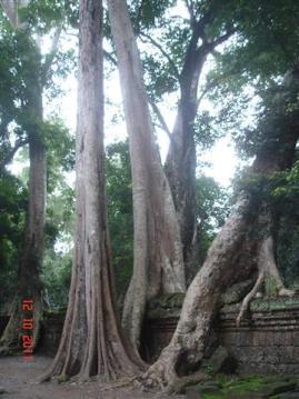 Cambodia4 451