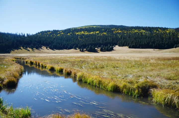 Howling, Yipping & Road Dancing at Valles Caldera National Preserve ||TERRAGOES.COM