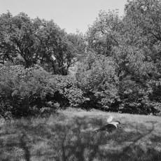 The Park 30 (2013)