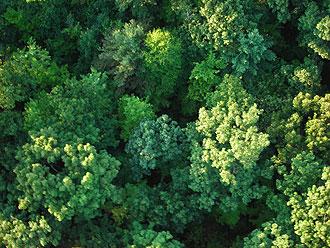 Dense summer woodlands in Massachusetts.