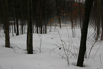 Winter woods by Long Hill, Massachusetts.