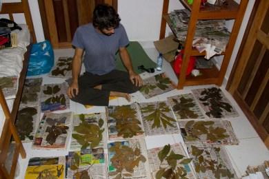 IDing Dried Plant Specimens