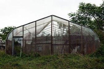 Abandoned Greenhouse, 2012