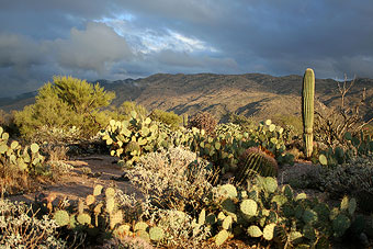 Winter clouds over Saguaro National Park east of Tucson. Photo by Simmons Buntin.