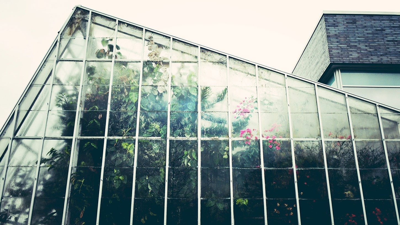 A greenhouse on a rainy day