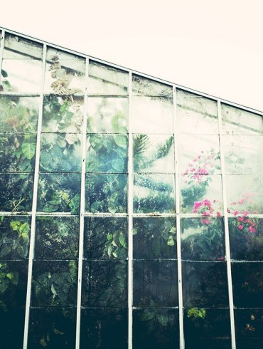 A greenhouse on a rainy day
