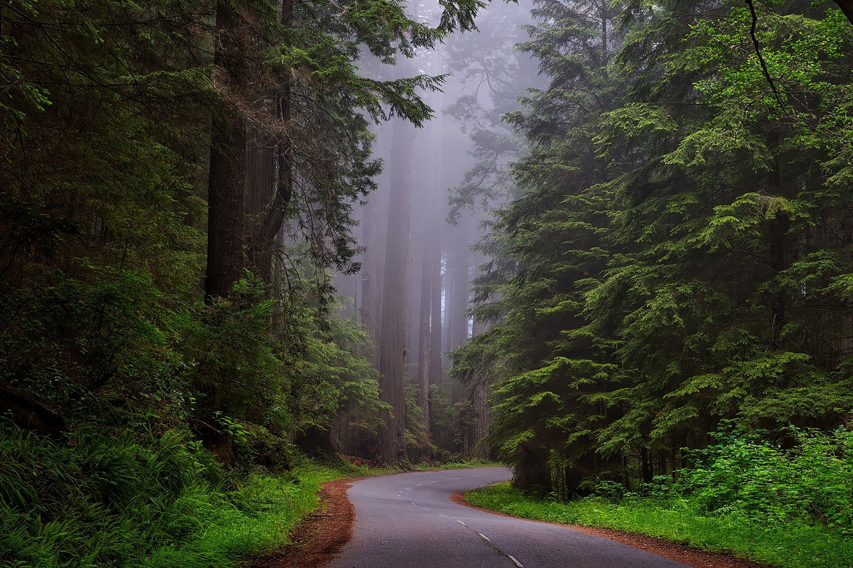 Road through Redwood National Park