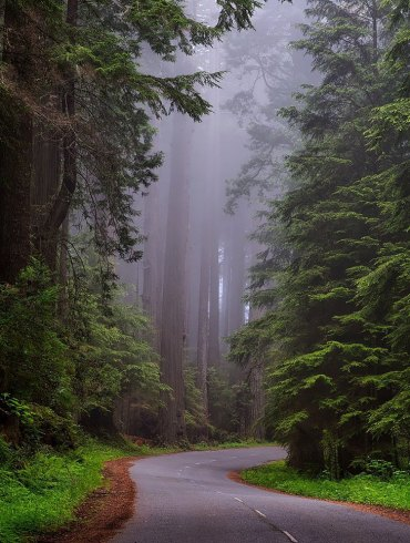 Road through Redwood National Park