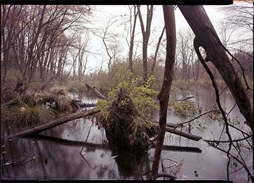 Sudbury River, MA