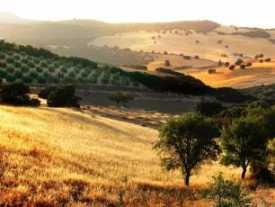 Issue 10 | Regarding the Rural