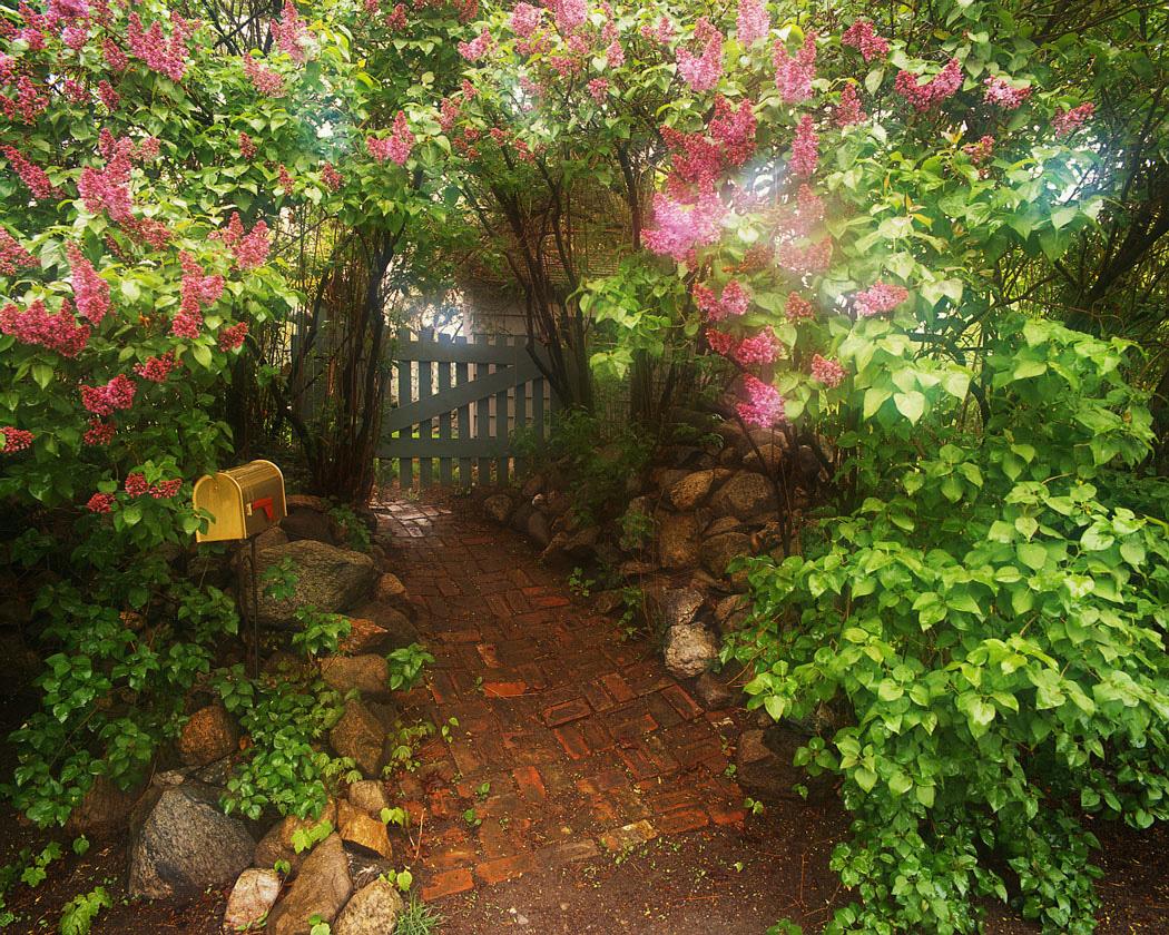 Issue 18 | Garden Gate