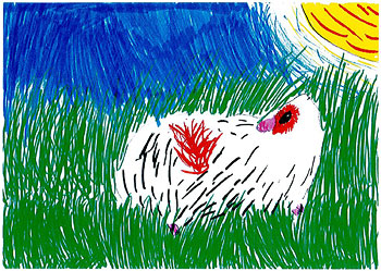 Drawing of guinea pig