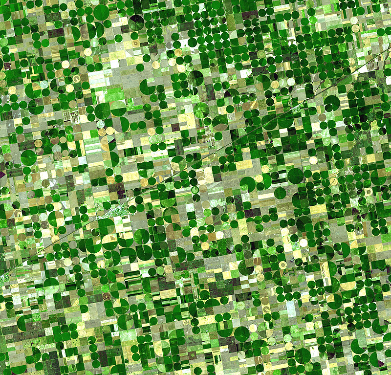 Circular crop fields in Kansas, characteristic of center pivot irrigation.