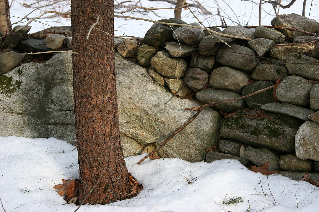 Leverett's stone walls