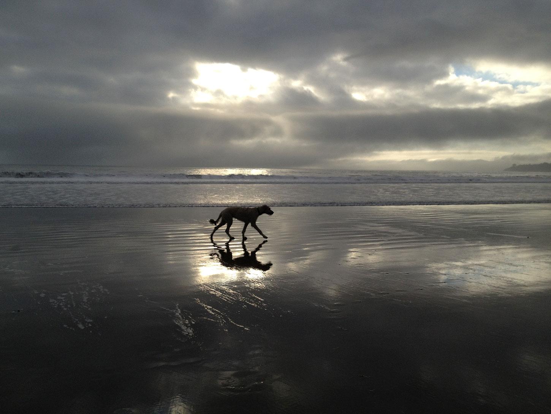 Pam's dog walking on beach